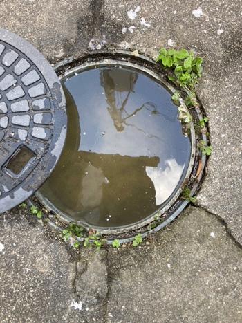 枚方市の排水詰まりの様子